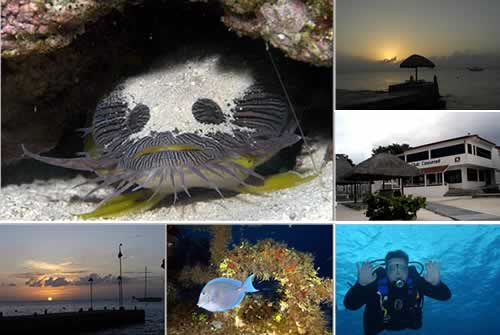 Collage of photos from Cozumel