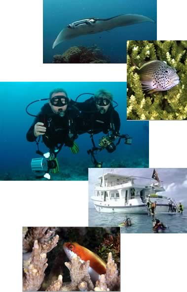 Diving photo collage